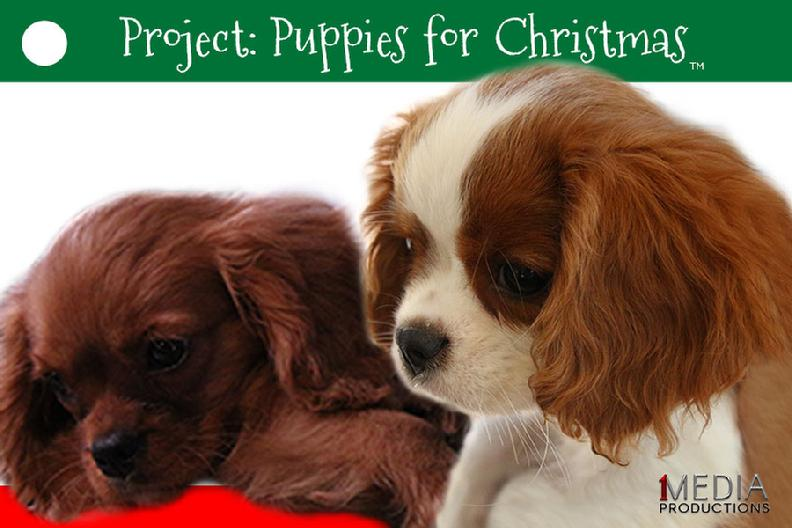 PUPPIES FOR CHRISTMAS NORKY STEVE ALLGEIER JOHN RATZENBERGER